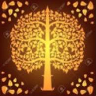 arbre-dore