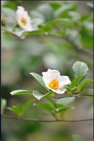 fleurs-arbre-sala