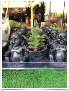 bouddhas-plantes