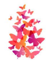 papillons3