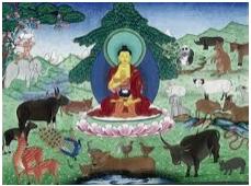 bouddha-animaux