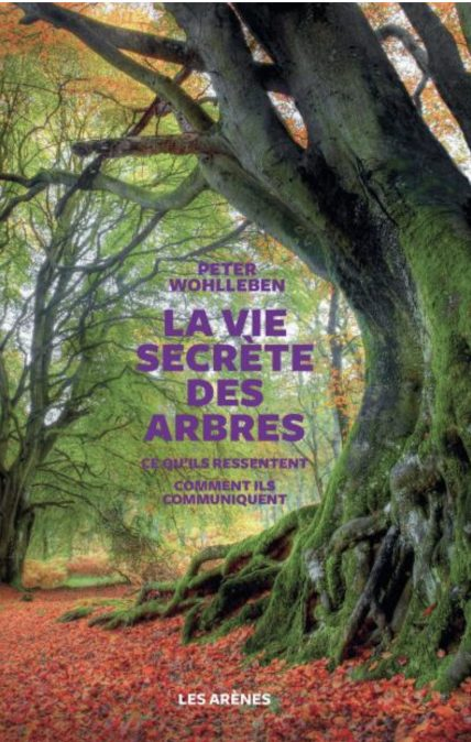 Arbres-vie-secrete