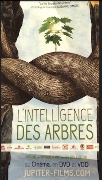 Arbre-intelligence