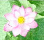lotus-small