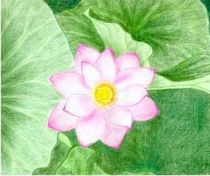 lotus-grand