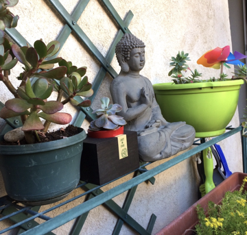 Bouddha terrasse
