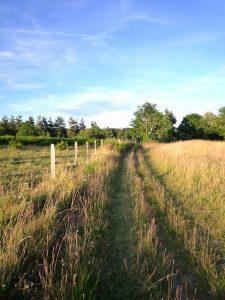 Chemin herbe