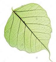 leaf 1 copie