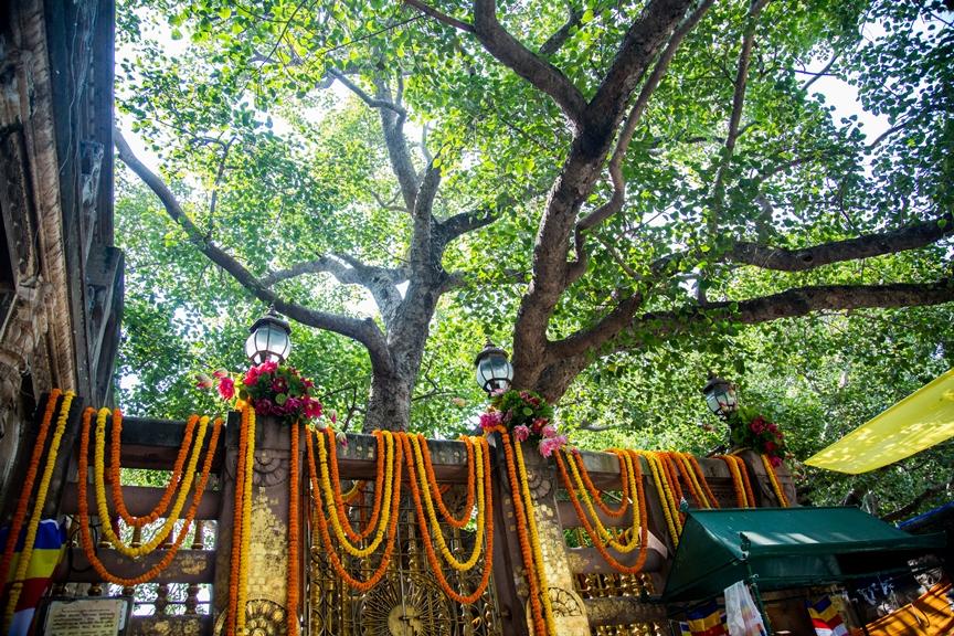 buddhist-pilgrimage-bodhgaya