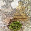 Ba assis-lichen3