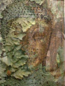 tete-Bouddha lichen2
