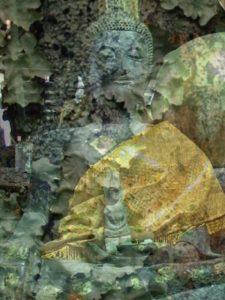 Ba lichen3