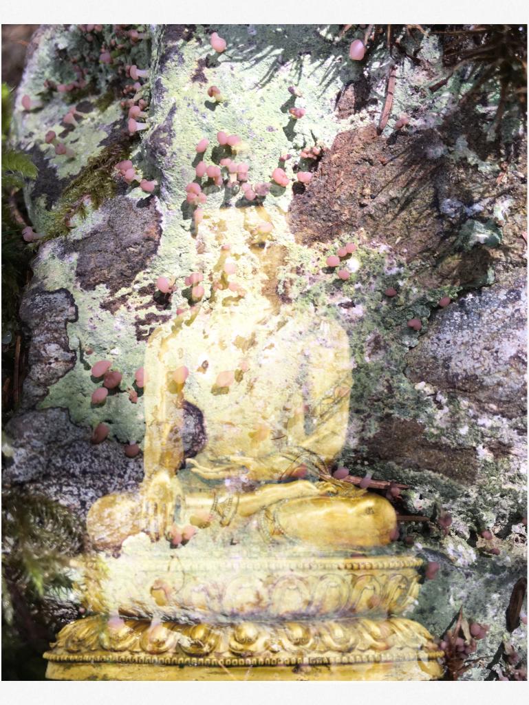 Bouddha-lichen5