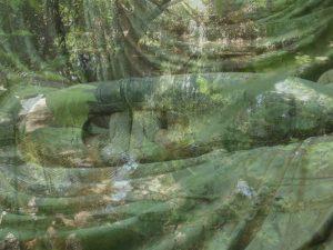 mains Ba lichen